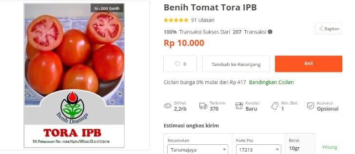 benih tomat tora ipb bogor