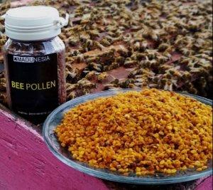 pollen randu jagung multiflora