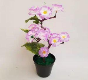 bonsai sakura tabebuya