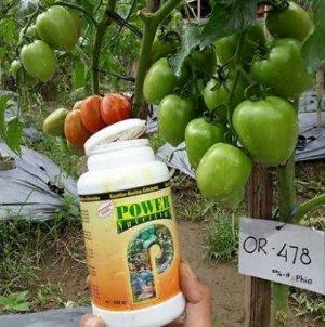 power nutrition pupuk buah