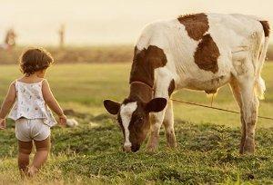 susu kambing vs susu sapi organik
