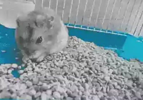 pasir zeolit hamster
