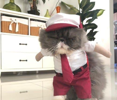 baju kucing seragam sd