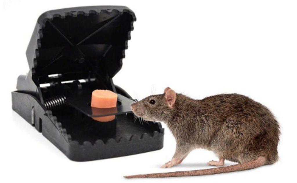 Jepretan Tikus Klasik langsung mati