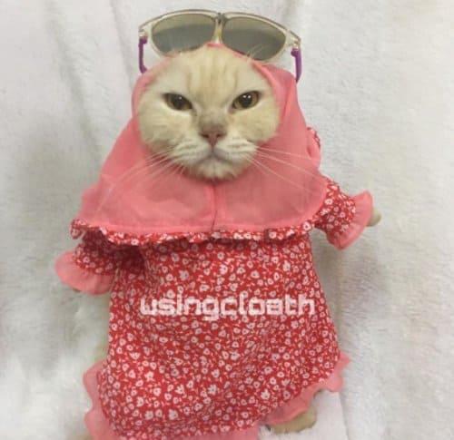 baju kucing karakter muslimah jilbab ukhty