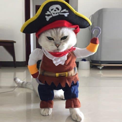 baju kucing jantan kostum bajak laut