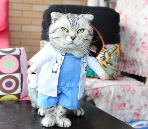 kostum kucing dokter