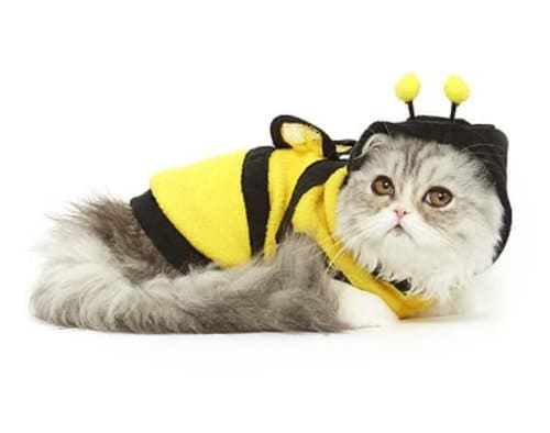 baju kucing bulu kostum lebah