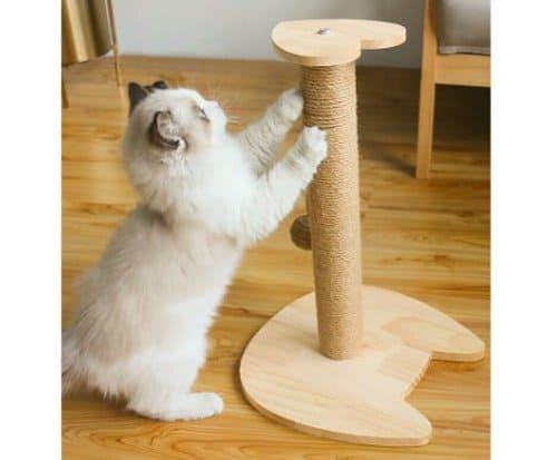 garukan kucing cakaran