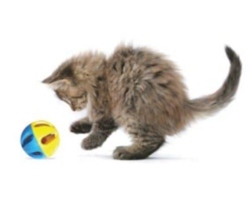 kerincingan bola kucing