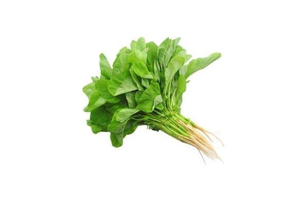 benih sayuran bayam hijau
