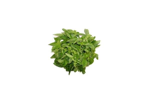 benih daun kemangi