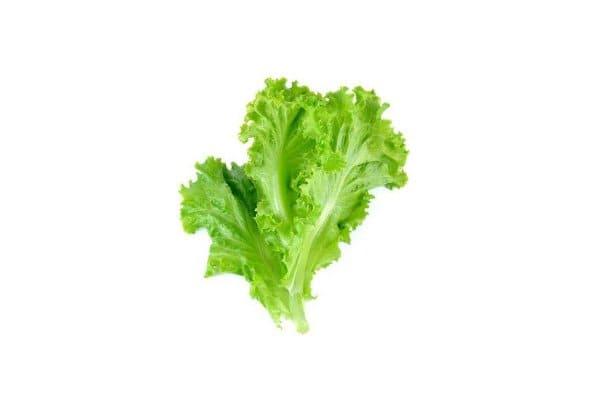 sayuran lalap selada keriting