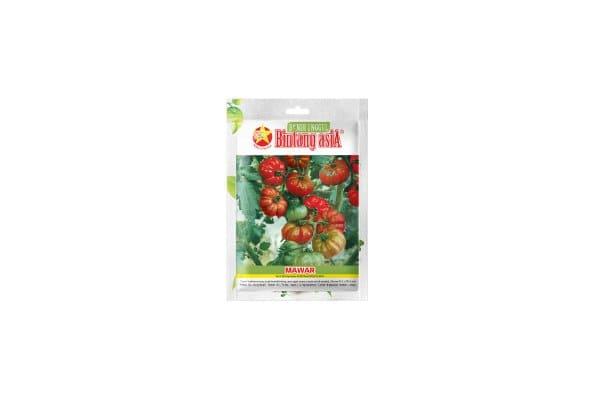 harga benih tomat mawar keriting