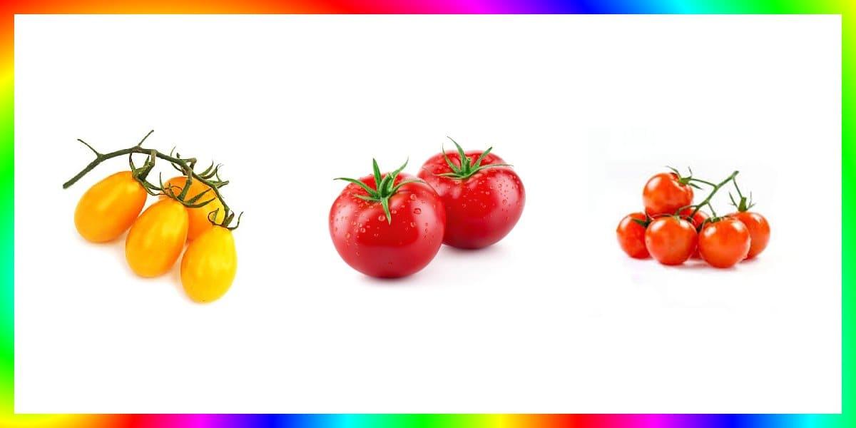 10 Jenis Benih Tomat Varietas Terbaik Yang Mudah Ditanam