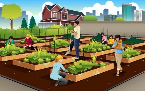 usaha pertanian di kota jualan sayuran organik